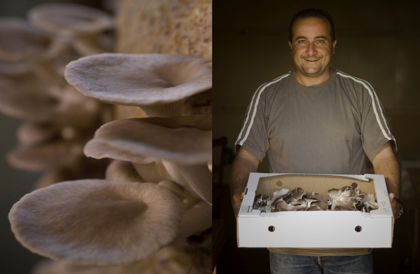 AIMAN SAMY, MYTOPIA MUSHROOMS-HAWKES BAY